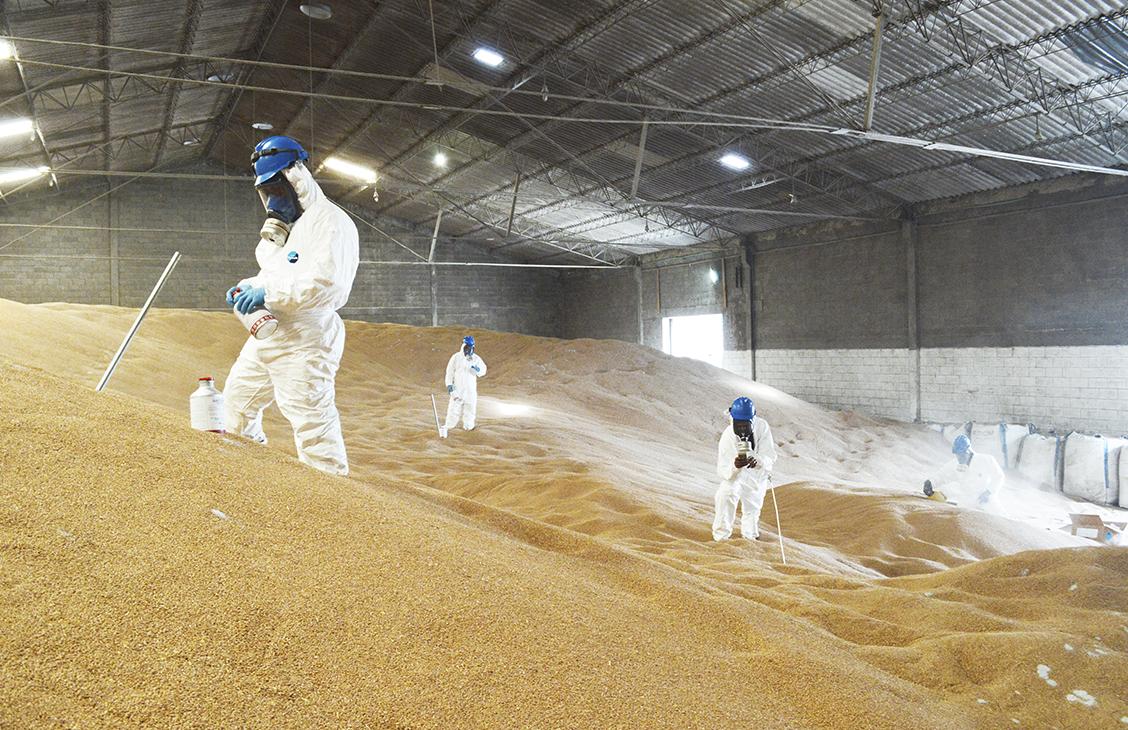 Control de plagas en granos almacenados