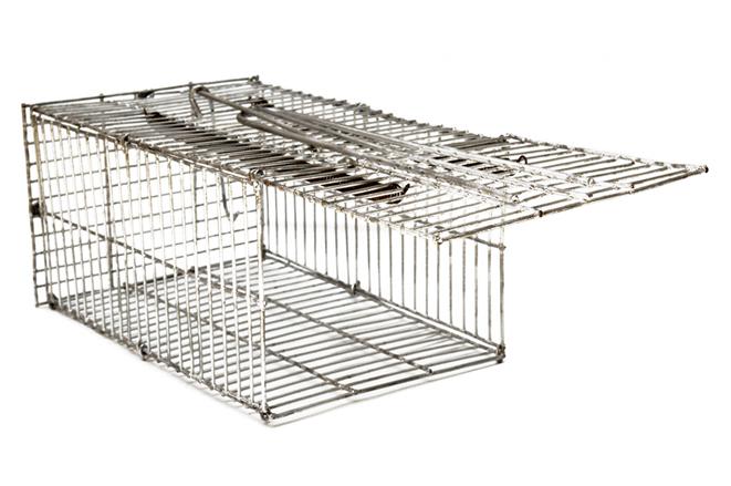 Jaulas atrapa roedores