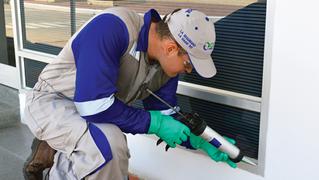 Servicio control de plagas comején termitas
